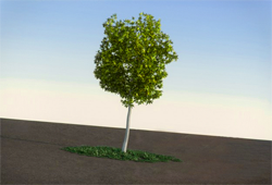 Plant / Tree 3D Models .max .obj .3ds