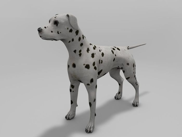 Puppy Dalmatian and Adult Dogs Rigged.