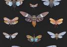 Cicada Collection