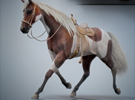 Horses Animated