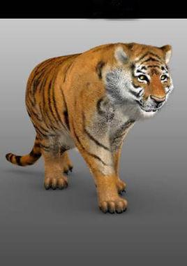 Tiger Modeling