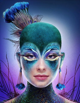 The Peacock & The Beauty