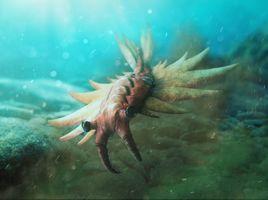 Anomalocaris Canadensis - The Anomalocaris