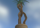 Exotic Potted Plant