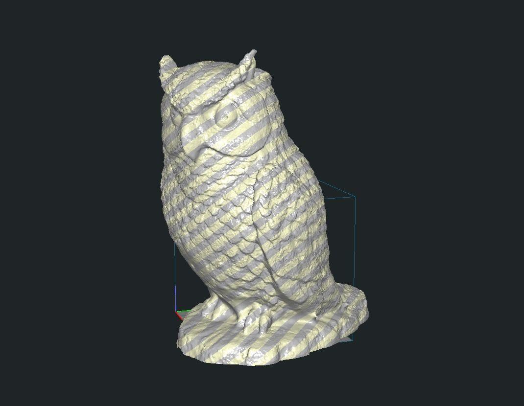 Owl Animal