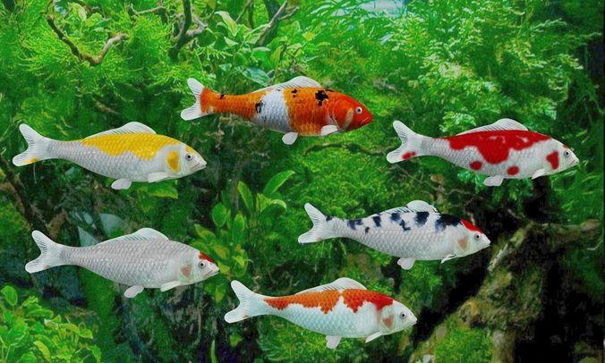 koi fish 3d model low-poly rigged animated max obj mtl 3ds fbx c4d blend 1