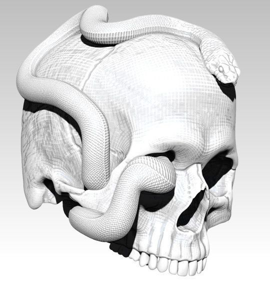 Curls snake with man skull Realistic High detailed 3d print