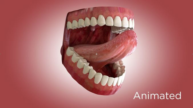 teeth and mouth 3d model animated max obj mtl 3ds ma mb 1