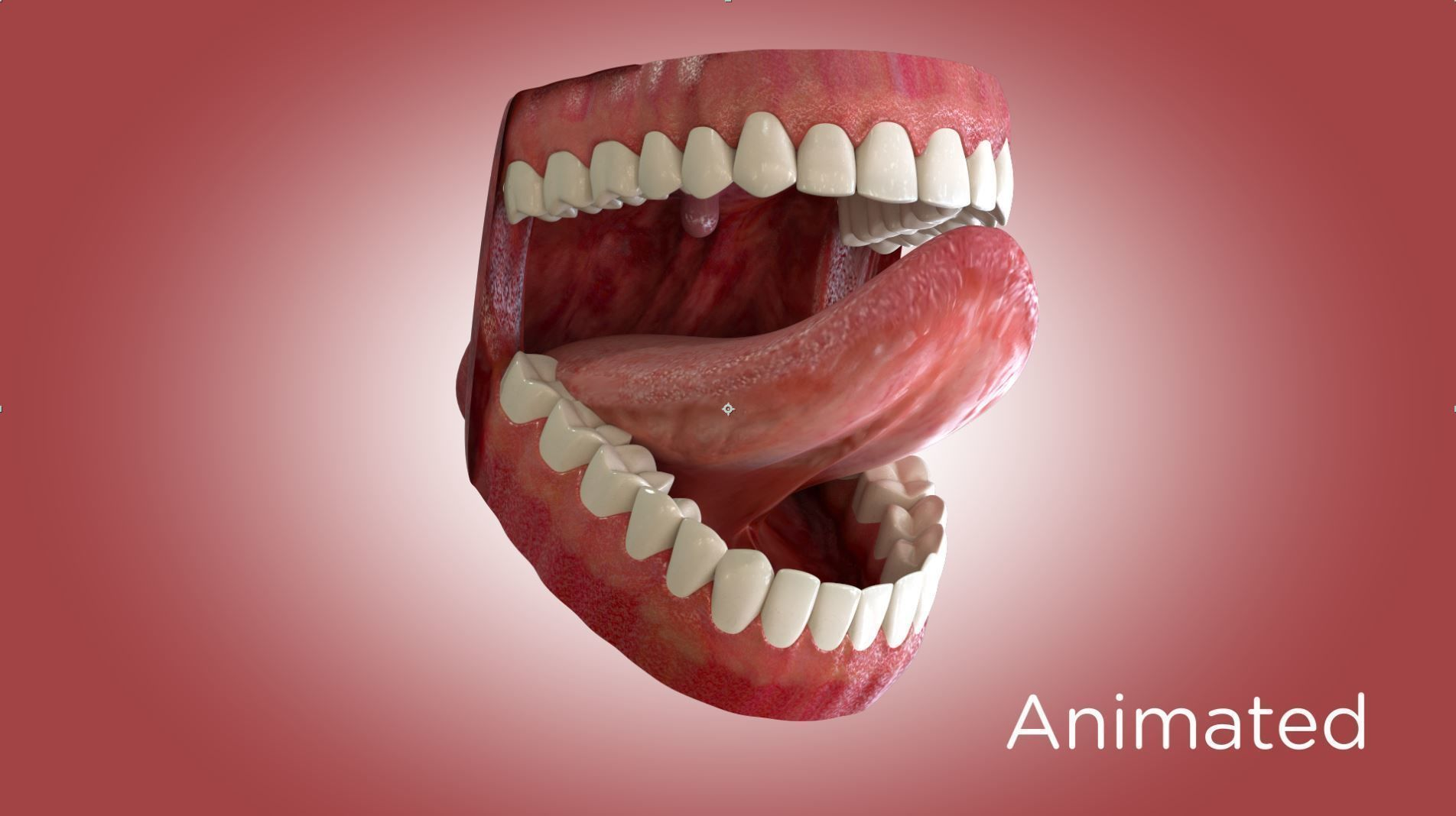 Teeth and Mouth