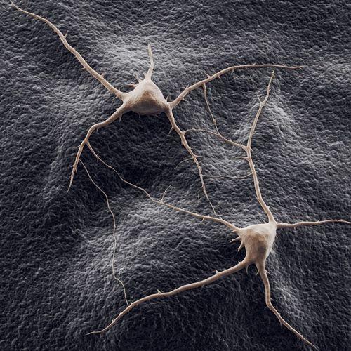 two neurons on a background 3d model max obj mtl 3ds fbx mat 1