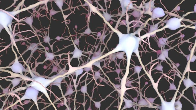 neurons 3d model obj mtl ma mb ply abc 1