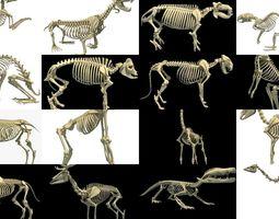 3D Animal Skeleton Collection