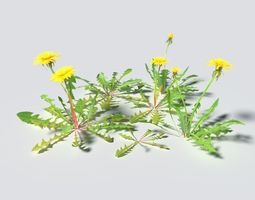 3D model Dandelion Pack