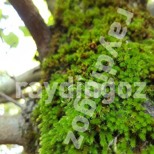 simple seamless moss texture 3d model  1