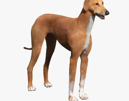 Azawakh Dog FUR 3D Model