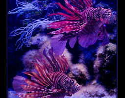 fish Pterois volitans 3D Model