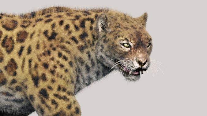leopard   3d model rigged animated max obj mtl 3ds fbx 1
