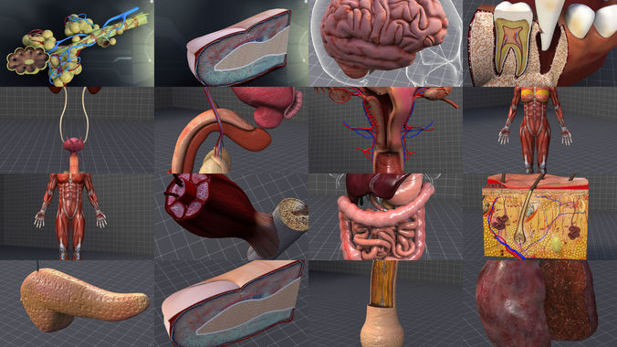 complete human body systems collection 3d model max obj mtl 3ds fbx c4d lwo lw lws 1