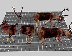 Dead Deer Set 3D model