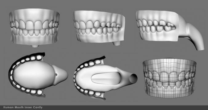 mouth inner cavity 3d model obj mtl fbx ma mb 1