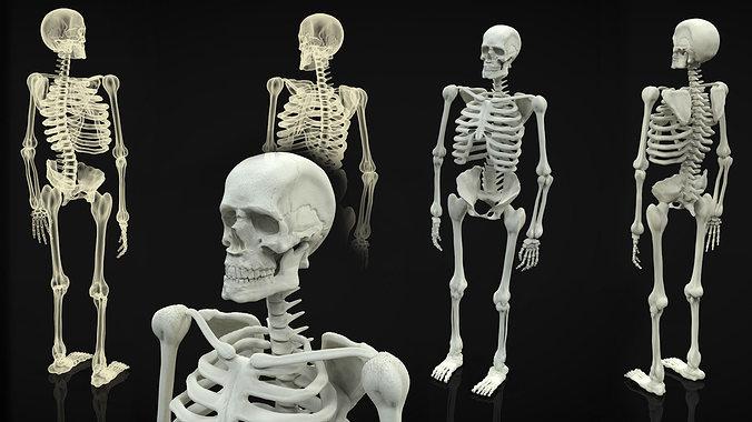 skeleton full body 3d model obj 3ds fbx ma mb mtl 1