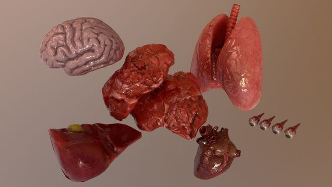 internal organs collection 3d model low-poly fbx tga unitypackage prefab uasset 1