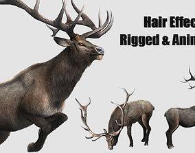 3D model elaphurus deer buck stag reindeer doe