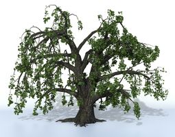 Old oak summer 3D