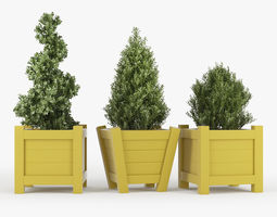 3D model Buxus yellow pot