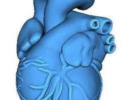 3D printable model Human Heart