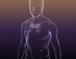 Human body - shape of a Male 3D asset