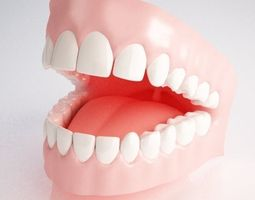 Gums and Teeth 3D Model