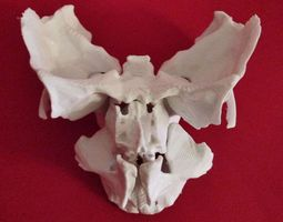 3D printable model Face - Partial Skeleton Human