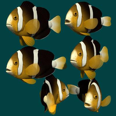 Yellowtail clownfish3D model