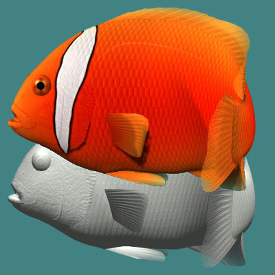 Tomato clownfish male3D model