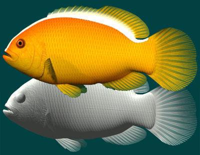 Yellow clownfish3D model