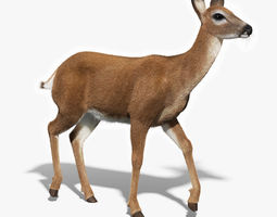 White Tailed Doe FUR RIGGED 3D Model