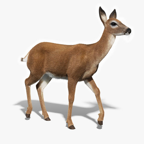 White Tailed Doe FUR RIGGED3D model