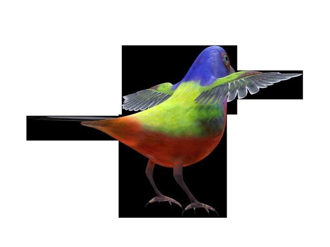 Bunting Bird3D model
