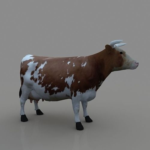 3D Design Cattle - CGTrader.com