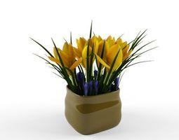 crocus yellow 3D Model