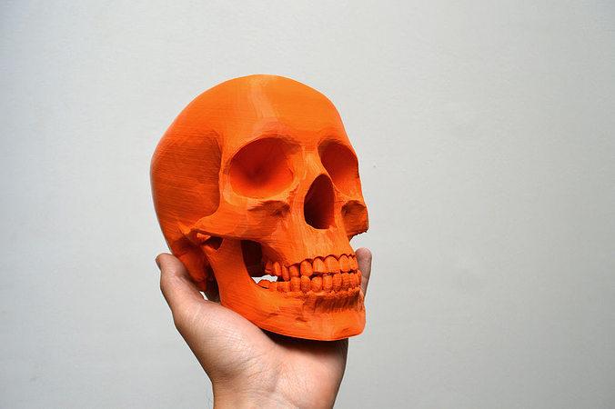 simplified human skull 3d model stl 1