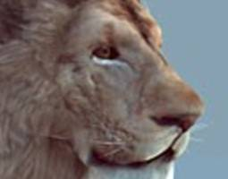 3D asset Lion realtime model