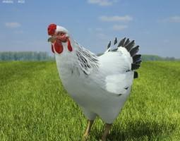 Chicken Hen Gallus domesticus 3D Model