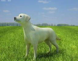 domestic dog labrador retriever canis lupus familiaris 3d model