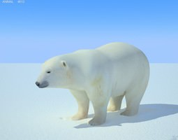 Polar Bear Ursus maritimus 3D Model