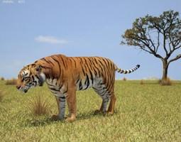 3D model Tiger Panthera Tigris