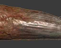 Spinosaurus  aegyptiacus Tooth 3D Model