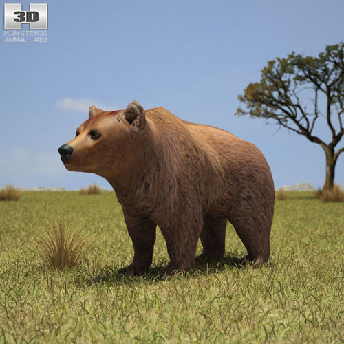Brown Bear3D model