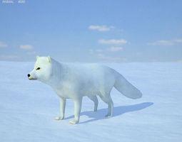 Arctic Fox 3D Model
